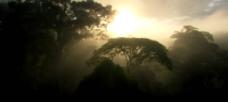 森林晨光景色视频
