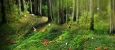 神秘森林系banner背景