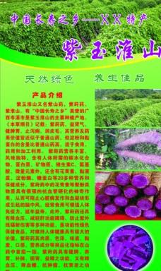 紫玉淮山图片