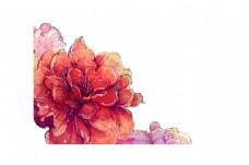 卡通红色花朵png元素