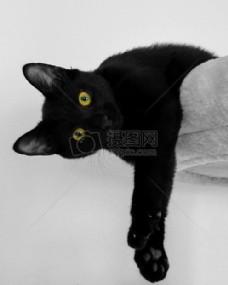 慵懒可爱的黑猫