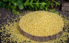 黄小米图片