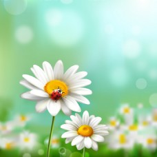 白云 草 春季
