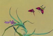 国画花 蝴蝶图片
