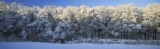 森林雪景淘宝海报背景图片 4