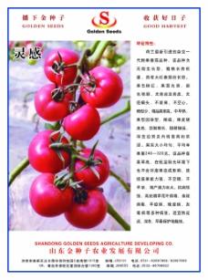 金种子单页