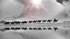企业文化画册骆驼团队psd