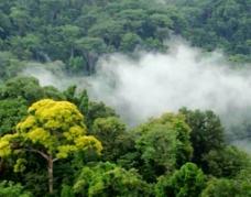 云雾缥缈的森林