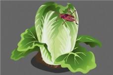 蔬菜植物大白菜flash动画