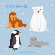 可爱的北极动物