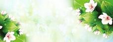 清新花朵背景