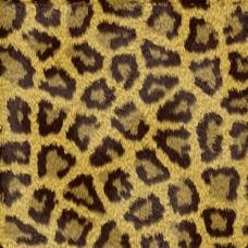豹斑的背景