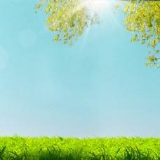 淘宝春季女装清新草坪树叶背景