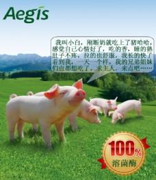 猪饲料功效创意海报图