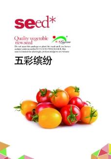 番茄包装图片
