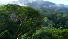 森林景色视频