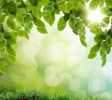 梦幻光斑与绿叶背景