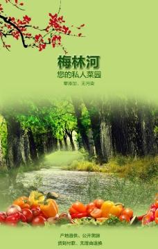 蔬菜手机端海报封面设计排版