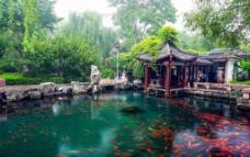 济南五龙潭图片