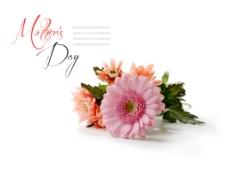 母亲节漂亮花束非洲野菊花,母亲节