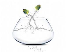 跳跃的鱼与玻璃鱼缸
