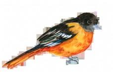 手绘两种颜色的小鸟png透明素材