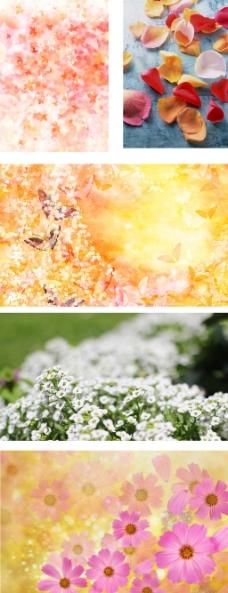 淘宝花朵全屏背景2