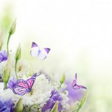 蝴蝶与鲜花背景