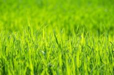 春天草地背景