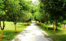 园林林荫小道图片