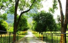 公园林荫小路图片