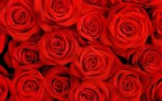 唯美玫瑰花图片