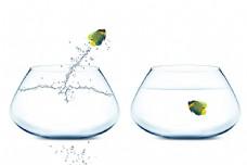 跳出鱼缸的鱼