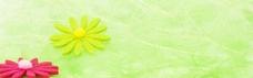 绿色 花朵 背景