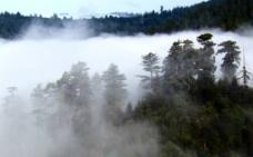 云雾森林视频