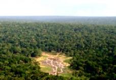 森林俯瞰镜头