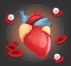 人体心脏器官设计矢量素材