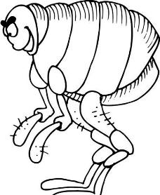 昆虫世界 矢量素材 eps格式_0064