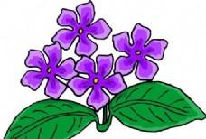 花朵 花草 鲜花 矢量 EPS格式_0006