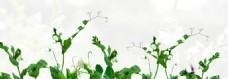 清爽绿色植物淘宝海报背景