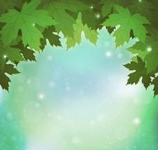 绿色枫叶背景图片
