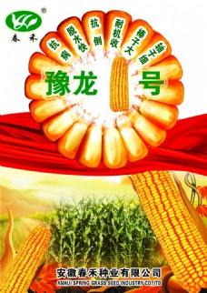 玉米种彩页