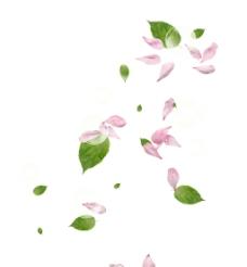 粉色花瓣素材 碎花瓣