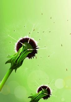 绿色蒲公英背景装饰
