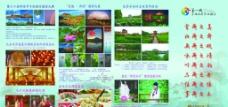 荷花节宣传四折页图片