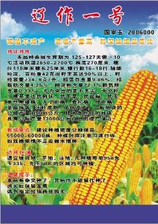 玉米封面传单分层psd