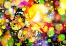 七彩蝴蝶背景