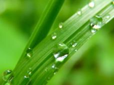 绿色晶莹水珠