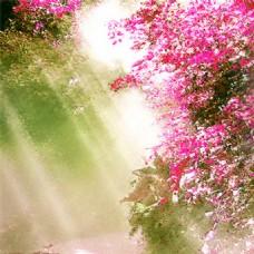 唯美花季主图背景
