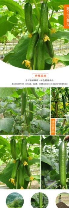淘宝蔬菜黄瓜详情设计图片